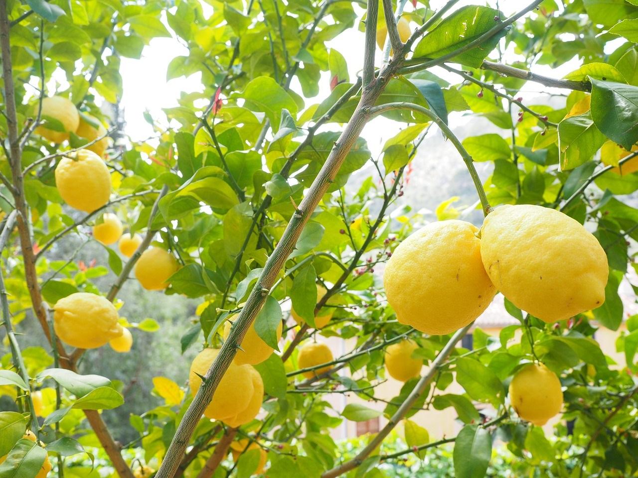 20 osvěžujících citrusových letních vůní