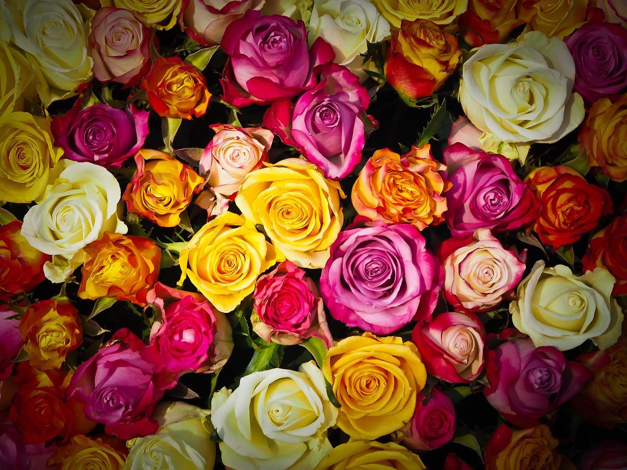 5 moderních parfémů s vůní růže