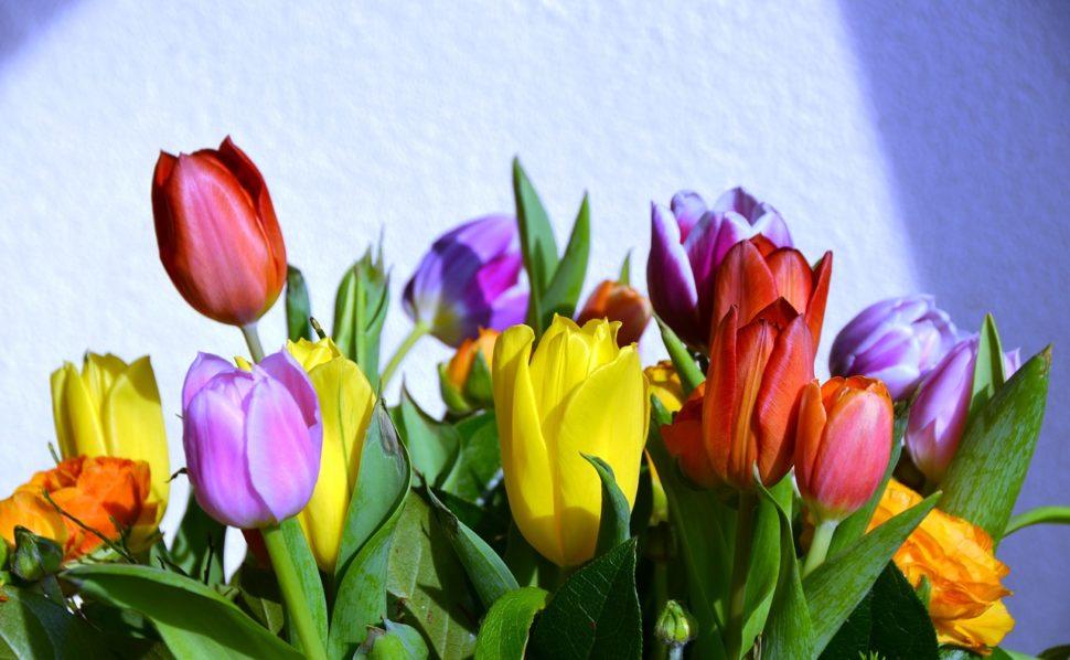 Jakou vůni vybrat na jaře?